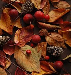 ba5dd14afc7922dad541827d75efa18f-autumn-crafts-autumn-photos-236x250